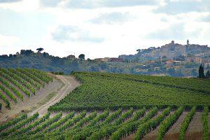 ll conventino wijngaarden