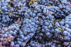 Mourvedre